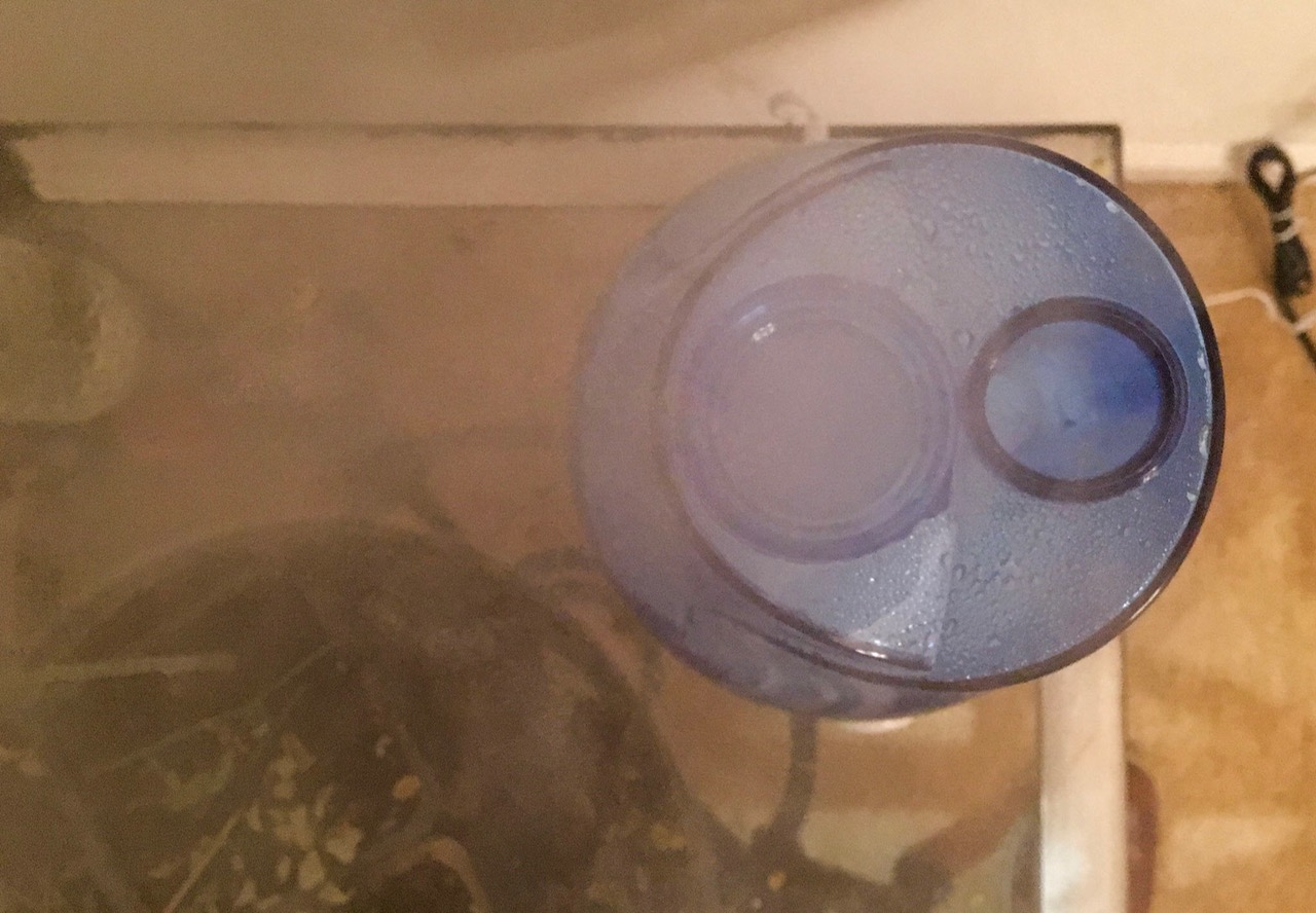 Growing Moringa Trees Indoors (Humidifier)