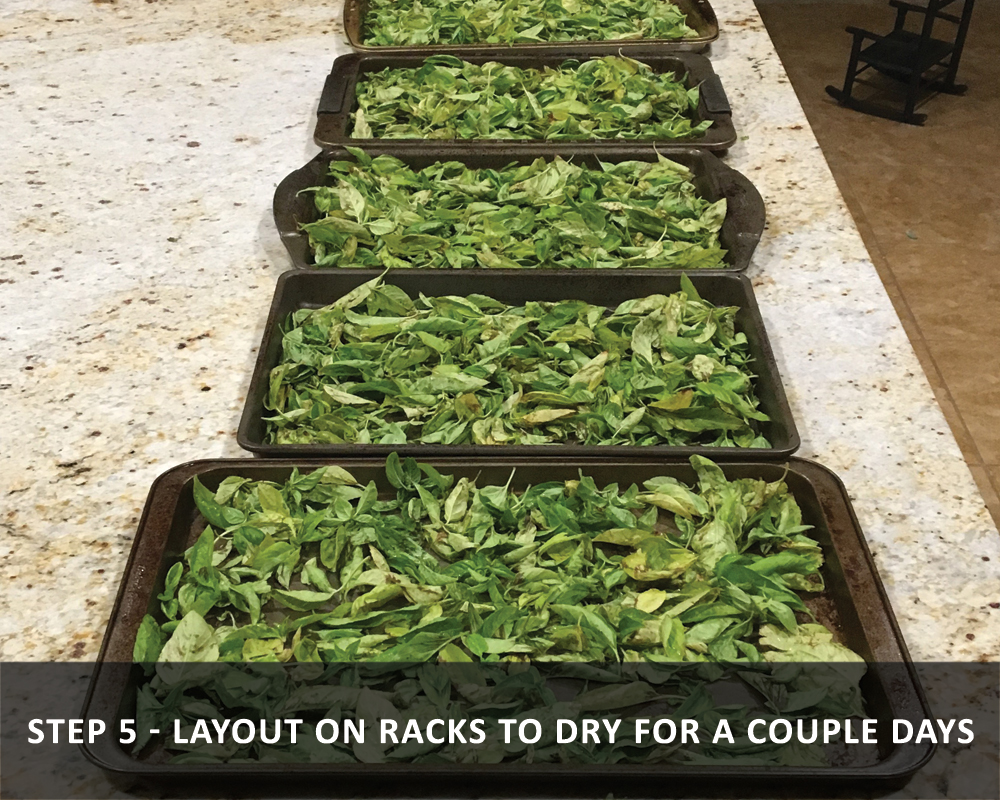 harvesting basil - Layout on Racks