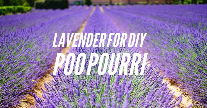 Lavender for DIY Poo Pourri