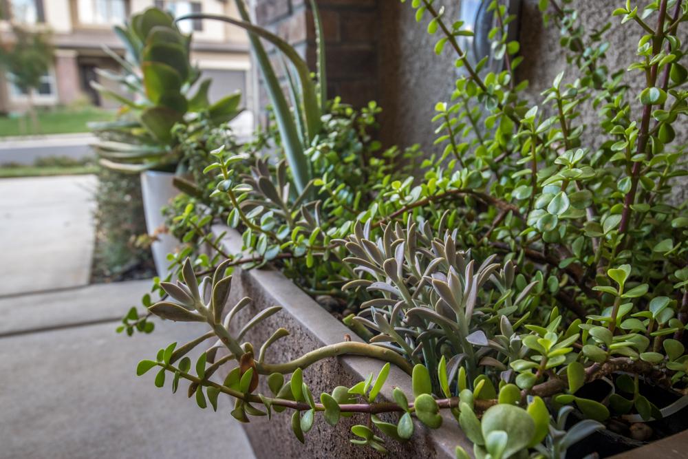 Front Porch Succulent Garden Inspiration